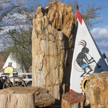 Geronimo- The World's Largest Petrified Tree